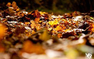 autumn family activities