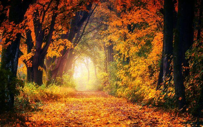 rural fairs surrey autumn
