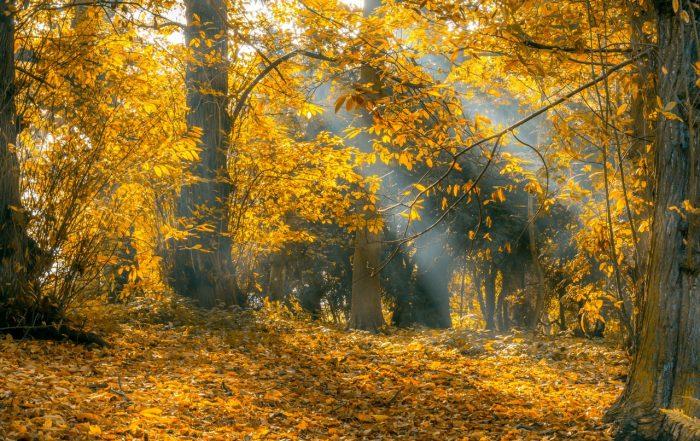 autumn walks in surrey